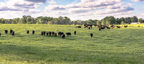 Best Ground Beef in Alabama