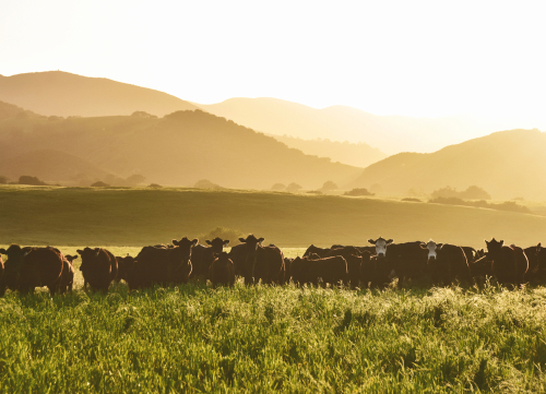 ground-beef-in-AZ