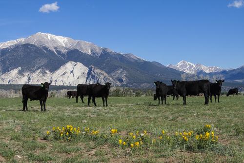 Best Ground Beef in Colorado
