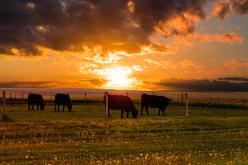 Best Ground Beef in Iowa