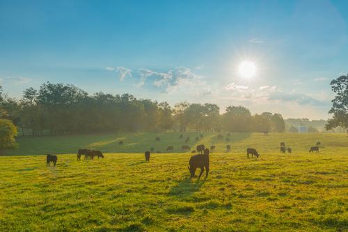 Best Ground Beef in Kentucky