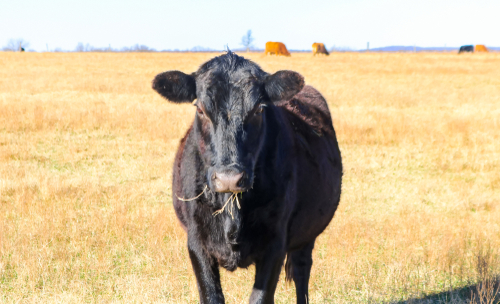 Best Ground Beef in Oklahoma