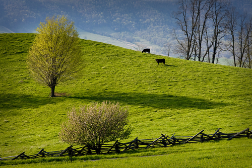 ground-beef-in-VA