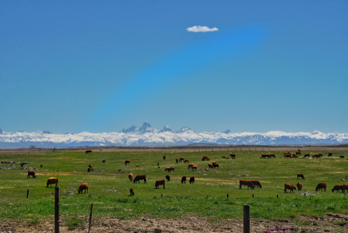 Best Ground Beef in Idaho