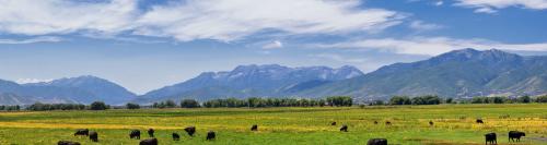 Best Ground Beef in Utah